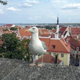 Житель Таллина