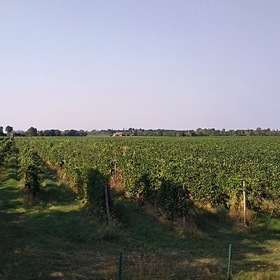Виноградники Прованса